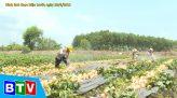 Câu chuyện nông nghiệp | 13.7.2021