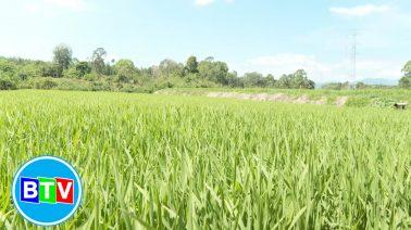 Bình Thuận nông thôn mới  | 13.6.2021